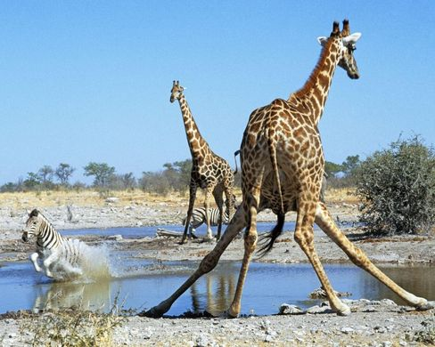 The Woman Who Loves Giraffes – PROTECT OUR PLANET NOW